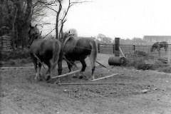Church Farm 1978. Peggotty & Duchess