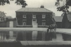 Manor-Farm-with-horse